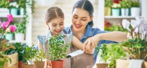 Grow Your Own Veggies in Your Apartment